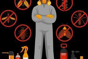Selecciona la mejor empresa de control de plagas y olvídate de las alimañas